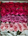 WISH-VALENTINE-FLOWER-BOX-ROSE-RED